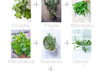 herbes epices