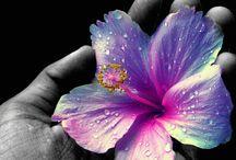 flowers★