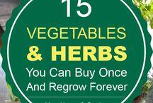 Regrow foods
