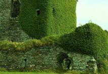 zielonkowy pałac