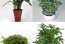 Plantas / Plantas de interior