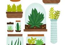 Plant illustration / 多肉植物のイラスト