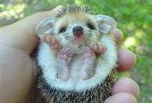 Cute Animal Pictures <3 / by Karyn Plaud-Rosy