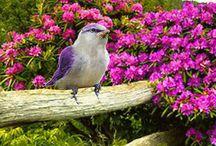 птички цветы