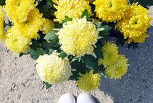 Jaune(s) / 50 nuances d'inspirations jaunes !