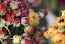 Flowers / by Nina Weinreich
