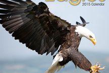 2015 Eagles Calendar / by MegaCalendars.com