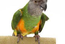 parrot hints