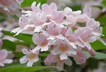 Flowers - Leaves 3 / by Delia Padilla Wenneker