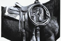Rodeo, horses n kids