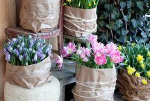 Tulpen en narcissen
