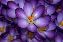 Beauty of Nature Wallpaper Flowers Nature / Szép képek, vegyes válogatás..