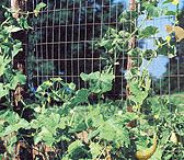 Gardening...without a green thumb! / by Laura Padgett