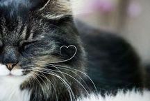 cat(ФωФ)