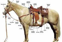 The Trusty Steed & transportation