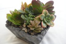 Plantes - Déco/Jardin