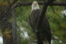 We Love Wildlife / Images of all the diverse wildlife in and around our beautiful SC Mountain Lakes.