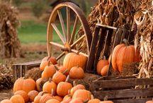Halloween & Autumn  / by Maureen Lazar