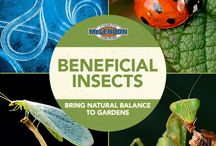 Beneficial Insects: Bring Natural Balance to Gardens