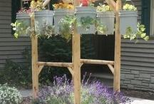 Gardening Tips & Outdoor Decorating  / by Marisol O. Preciado