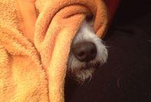 My dogs / Fotos und Geschichten unserer Hundebande