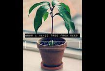 Planter - inddørs