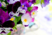 Flores Pensamientos