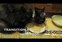 Házi finomságok cicáknak