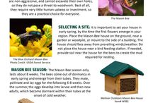 Solitary Bee Tips