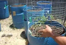 Container Gardening / Self-Watering Systems, Aquaponics, Hydroponics, etc.