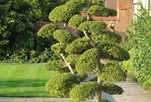 Buxus, topiary, hedges