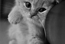 Chatons mignons / by Marie-Christine