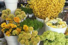 Une pluie de fleurs / Nos fleurs immortelles (pour ne pas dire artificielles) imitent avec talent le charme des vraies sans les inconvénients ! Approchez-vous un peu pour voir..