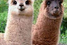 Lám a lámáék és más állatok... / állatok