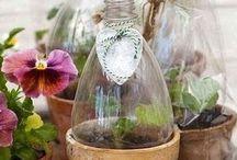 Jardin, plante, bouquet