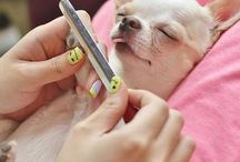 Funny animals manicure