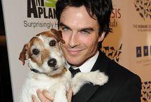 Dog Lovers / TODO lo que cualquier amante de los perros podría buscar.