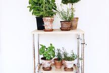 Plants - interiør