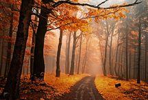 Photo - Nature