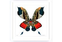 Butterfly Art Prints / Everything Begins is an online gallery that sells artworks from top emerging artists from around the globe.    Our range of butterfly prints have been handpicked from some of the world's best and most noted emerging artists, including Kristjana S Williams. At Everything Begins, you can choose from a range of butterfly art and modern art prints in various styles.   All of our artwork collections include affordable art, and are available to buy online with worldwide shipping.