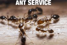 Pest control Auckland / Got a pest problem in your home or office? Apex clean offers affordable and effective pest control services within Auckland.