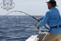Fighting Tuna