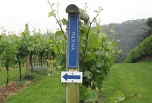 Sharpham Vineyard, Devon / Home of Dart Reserve, Whole Berry Rosé, Beenleigh and many other award-winning English Wines.