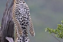 other big cats