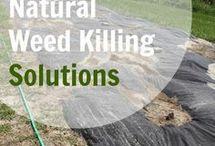 Weed killing natural