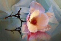 AAA FLOWER 2
