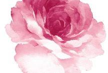 watercolour rose pink