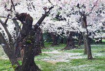 Frühjahr/spring