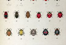 Bug/insect tattoos