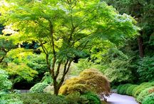 Trädgård/altan